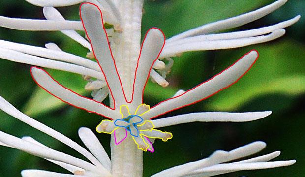 花の構造2