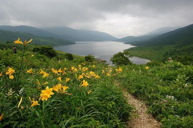 野反峠からの眺め ニッコウキスゲが斜面を埋め尽くす... ほどには咲いていなかった 2008.07.20