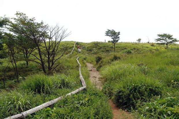 高ボッチ山の山頂に至る散策路。 傾斜が緩やかで、本当におさんぽ気分で歩けます。