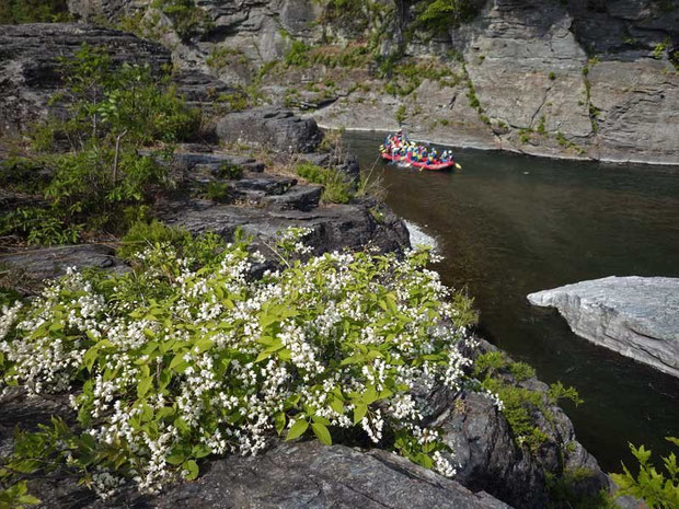 岩の上にも様々な植物がいた