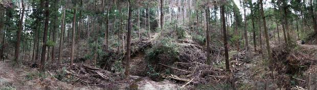 重機が入り縦横無尽に山肌を削って作業道を切り開き、間伐が行われている。(パノラマ撮影)