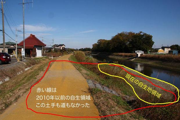 治水になるのか? 疑問を抱かせる土手が築かれ、自生地領域は1/3以下に狭められた。