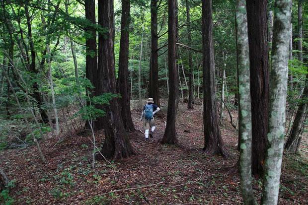 ブナやミズナラが多い深い森