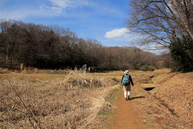 武蔵村山市の里山を歩く  この季節、田んぼにいたイチョウウキゴケは完全に姿を消していた