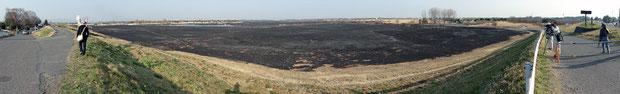渡良瀬遊水地 広大な面積のヨシ原が焼かれた 2013.03.17 15:40頃撮影