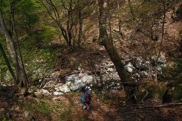 かつてはあったのかも知れない登山道の痕跡は、ほとんど残っていない