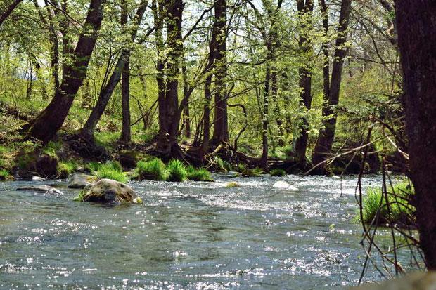軽井沢はまだ新緑の季節。 小さな川の畔を散策したら、とても気分がいい!