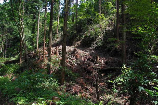 山肌を荒々しく削って造られた道。 伐採した木が無造作に投げ捨ててある