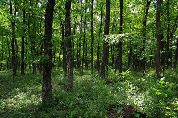 こんな感じの気持ちのよい森でサカネランを探した