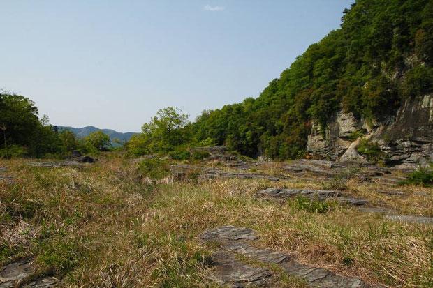 河原の岩の上を進む... こんな場所にシランがいるのだろうか