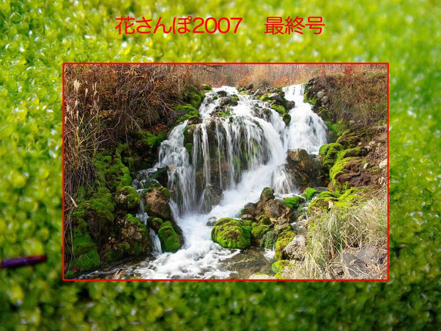 本州最大のチャツボミゴケ自生地が、六合村にありました。バックはチャツボミゴケの拡大写真