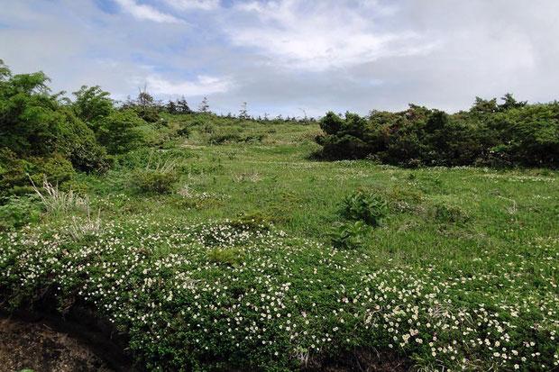 蔵王の湿原