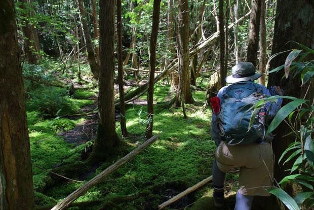 森の中に美しい苔フィールドが広がっていた