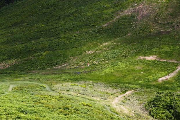 湿原。中央の赤い点はHiroです・・遠すぎて見えないね