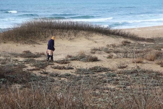 イソスミレが見られるという海岸。 まだ早すぎたようだ