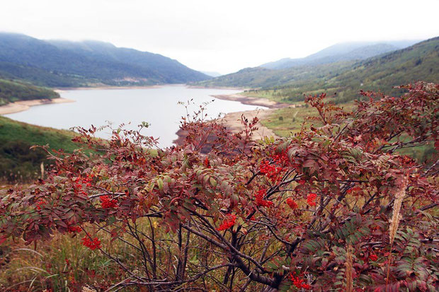 野反湖の花の季節は終わりを迎え、紅葉が始まり、ナナカマドの実も鮮やかになった。 2008.09.28
