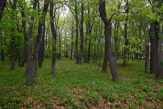 明るい雑木林の里山  新緑が目に心地よい