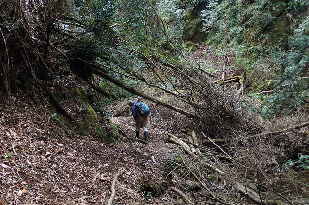 歩き始めは、この程度の倒木
