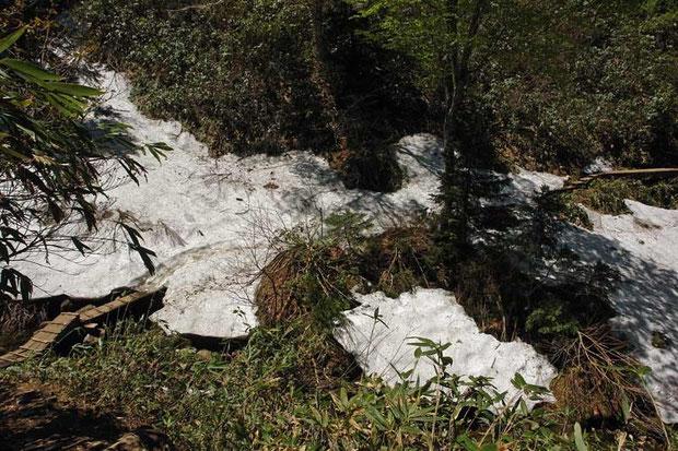 コース中、唯一雪が残っていた沢。 左手前から右奥に延びる木道が見えます。