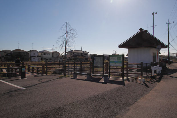 自生地を潰して築かれた土手に駐車場が造られていた。 記念樹なのか、枝垂桜が植えられていた。