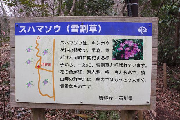 自生地の中の案内板。 環境庁・石川県は、「スハマソウ」であると。 いったいどっちなんだい。