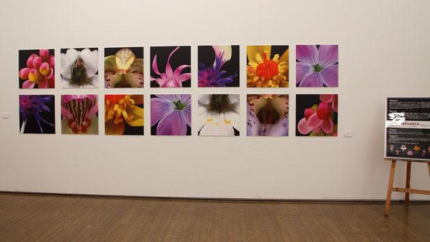 展覧会は高崎シティーギャラリー第1展示室にて2020年2月15日(土)〜2月19日(水)の期間開催された