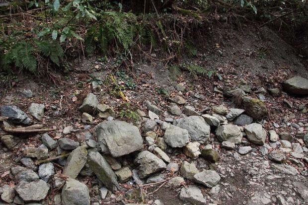 ハナネコノメが一番群れて咲いていた場所がこの有り様に。 目を疑うとはこのことだ! 面影さえない!