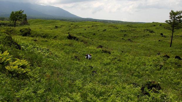 とても広大、そして気持ちが良い草原
