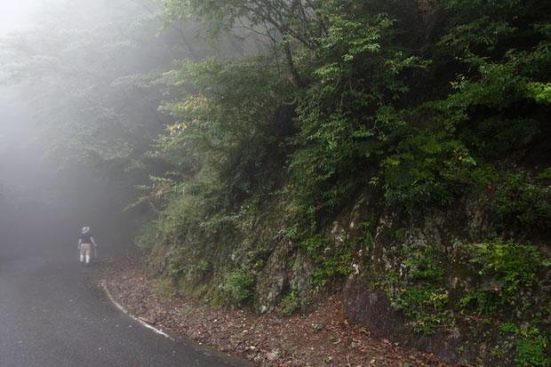 このような岩肌に点々と咲いていた。 霧が立ち込めていたが、花探しの障害になるほどではなかった