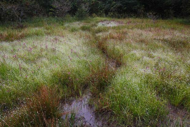 小じんまりしているが、とても雰囲気のよい矢並湿地。 なんだかとても落ち着きます