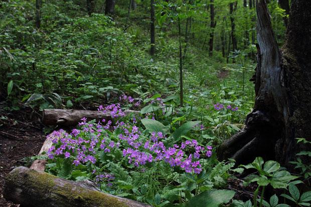 森の小径を進むと、こんな場所が何度も現れる。 管理している方々の、この森への愛着が感じられた