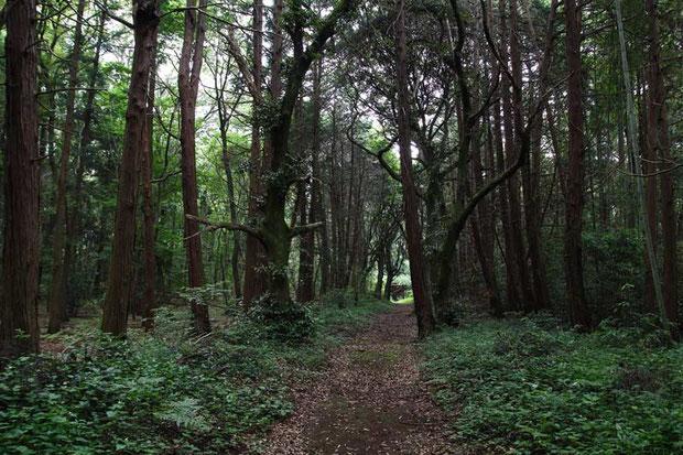昼間でも薄暗い森