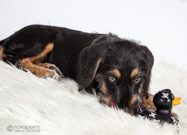 Hundefotos Hohenstein-Ernstthal