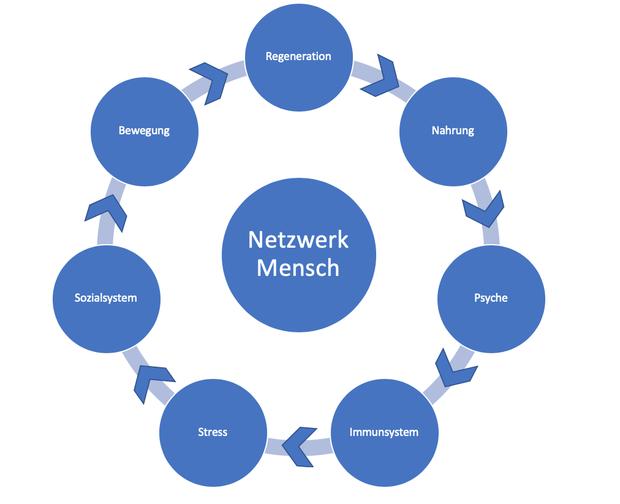 "Kreis ""Netzwerk Mensch"" Zusammenhang Grafik zwischen Bewegung, Regeneration, Psyche, Immunsystem , Stress, Soziales Umfeld,"