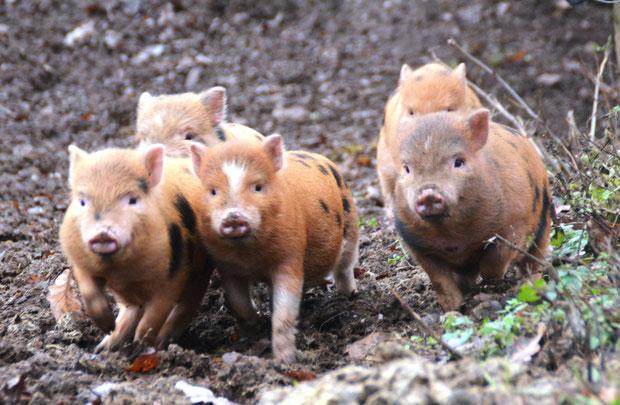 Schweinisch viel Glück für 2019!
