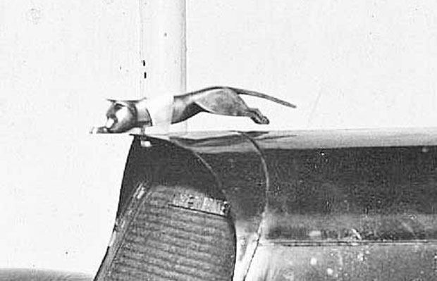 MASCOTTE D'ANDRE DUBONNET. MYSTERY CAT