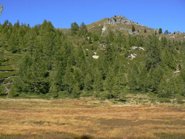 Moorgebiet beim Munzelüm