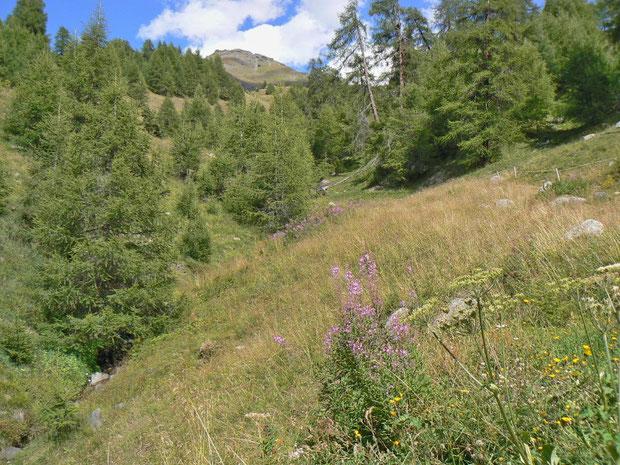 extensiv genutzte Wiese im Val d'Hérèns VS