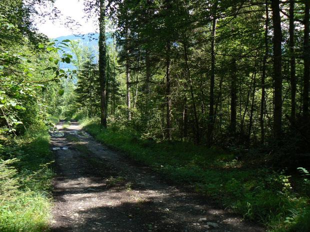 Mischwaldvegetation in der Region des Steinibaches
