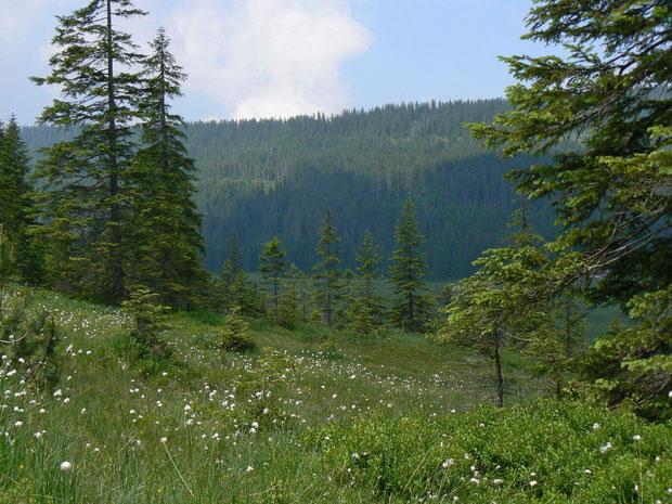 Naturschutzgebiet im Glaubenberg OW