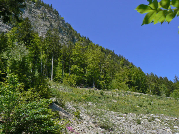 Steinbruch, der sich neu mit Pflanzen besiedelt