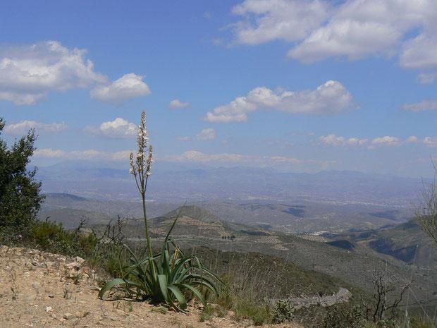 Andalusien (Sierra de los Filabres)