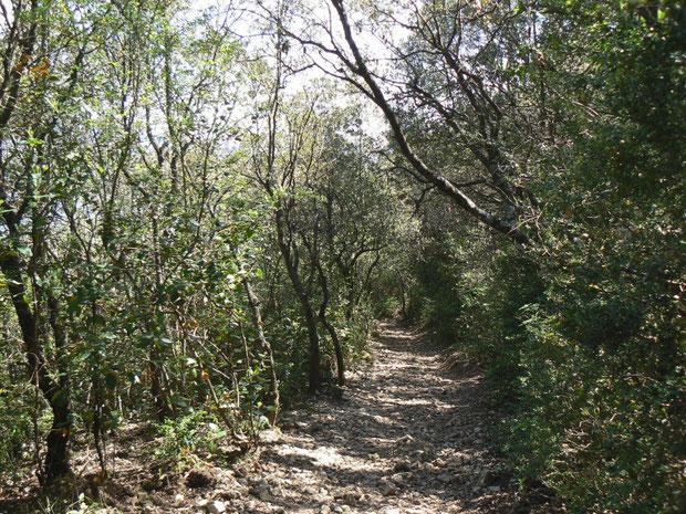 Waldweg zur Côte de Liausson