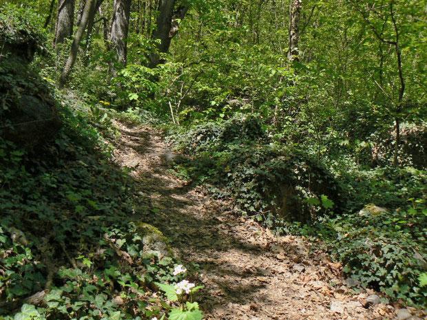 Mischwald im unteren Bereich
