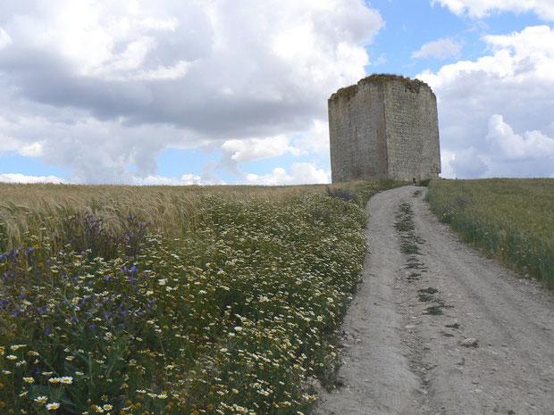 Der Torre beim Stausee mit dem Brachlandgebiet