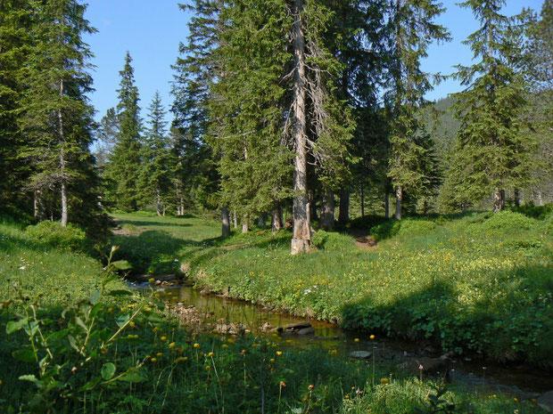 Bergföhren-Moorwald