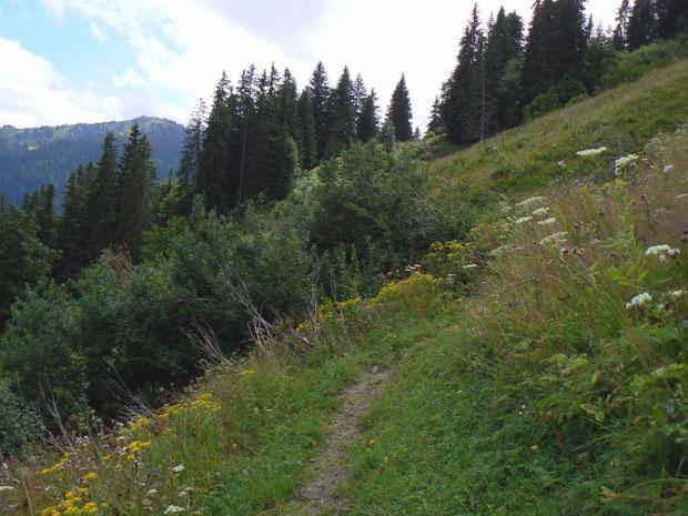 Bergweg zum Hochstaudenfluren-Gebiet