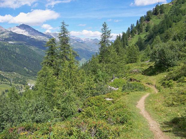 Straucherlenvegetation auf dem Weg zum Passo San Giacomo TI