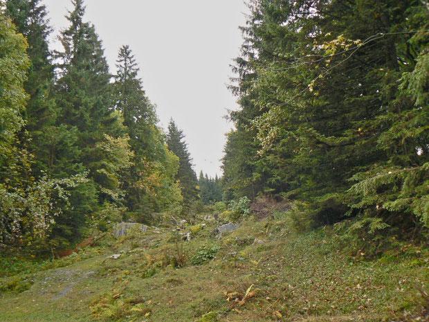 Waldpartie mit Hochstaudenfluren
