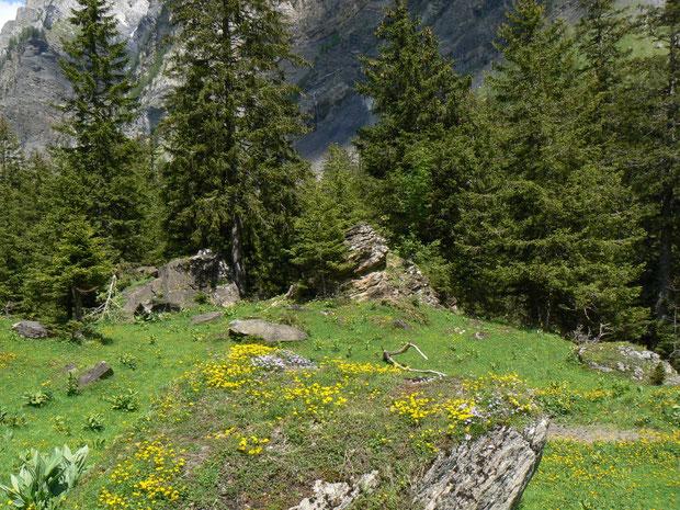 Bergwald mit Alpenflora